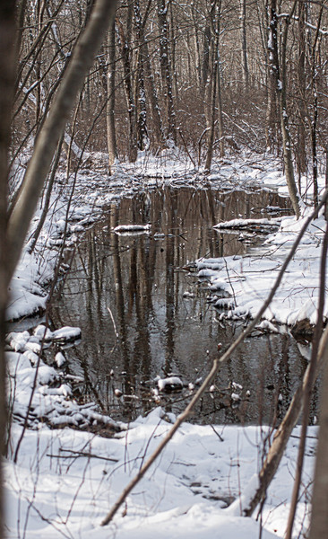 December 30, 2012 - Wetland from trail to entry Kiosk