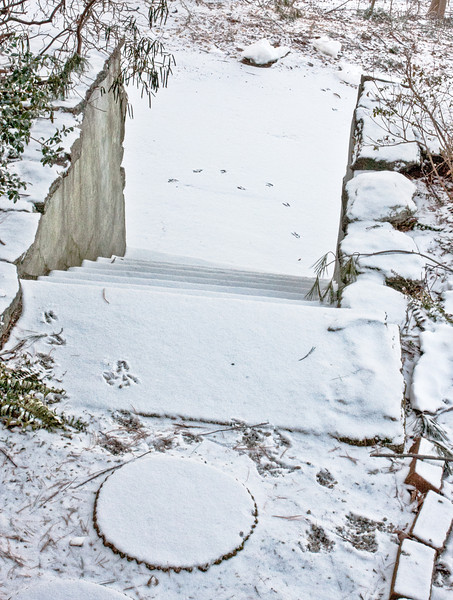 Bird tracks on front steps after snow started fallling before blizzard hit
