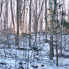 Sunrise After Dusting of Snow - Rock Hill Road - January, 2013