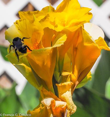 Bee May 2017