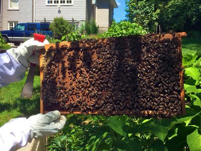 BeeHive Progress  Aug 7th 2016