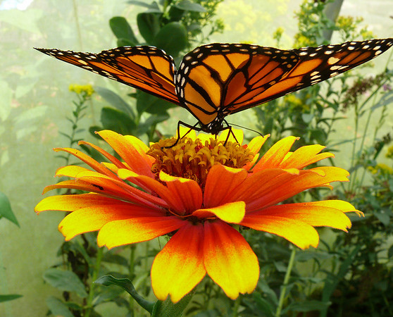 Beech Creek Butterfly House and Gardens