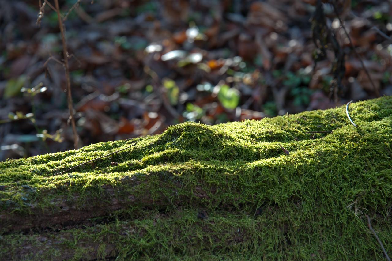 Beechwood Farms Nature Preserve - Fall 2011