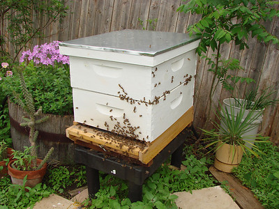 This is how the original hive box looked after one part was removed to hive the swarm of bees that I captured.