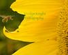 SunBee1551