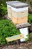 BeeHive2050