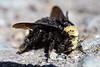 Bee&Ants6897