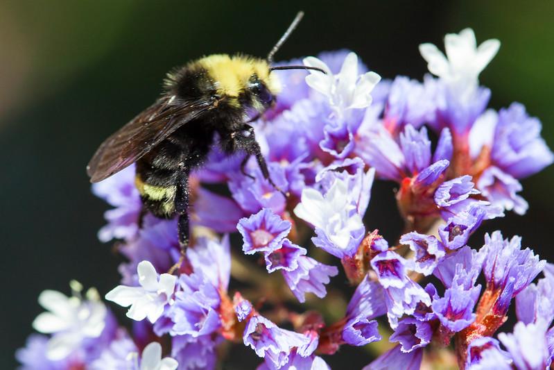 Bee3289