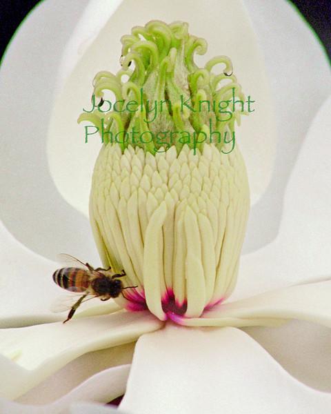 Magnolia&Bee-