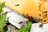 BeeHive2052