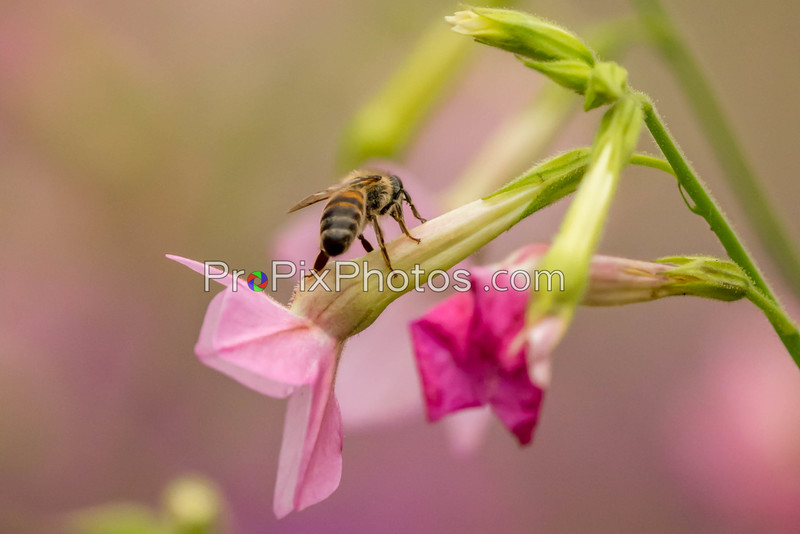 Bees 5-16-15