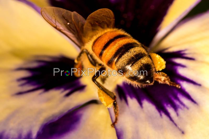 Bees, Dallas Arboretum