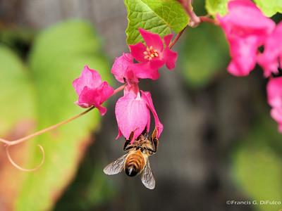 Bees November 2013