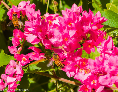 Bees October 2014