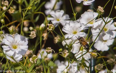 Bees September 2013