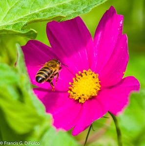 bees decenber 2012