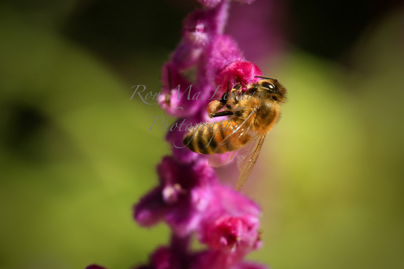 bees (2 of 1)-1