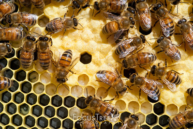 Bees-22