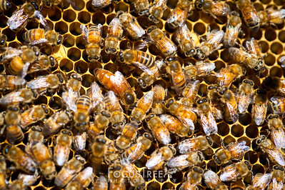 Bees-26