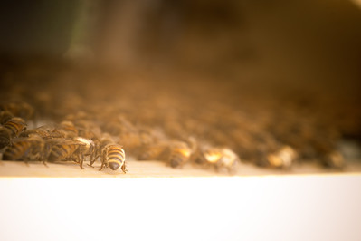 Bees-18