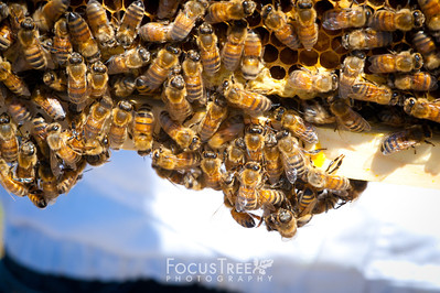 Bees-23