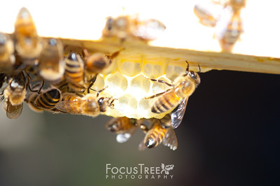 Bees-28