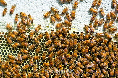 Bees-15
