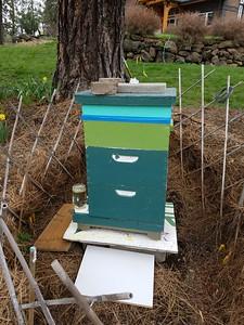 4/25/17 - Sick Bees???