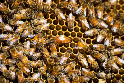 Bees-27