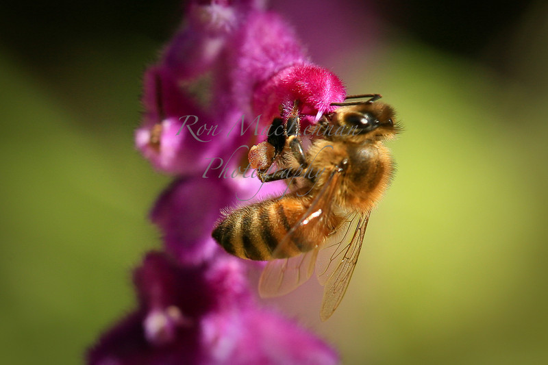 bees (3 of 1)-1