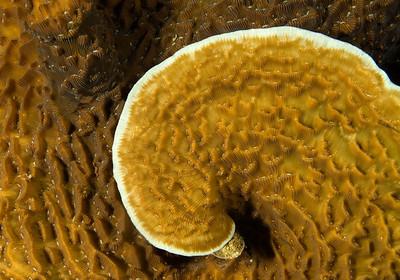 DSCF0793 coral spiral
