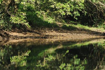 Macal river canoe trip