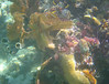 Hard and soft corals and sponges in Belize are some of the best in th Carribean.