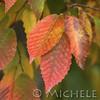 Fall_009_BBG_LH0A2374_M_Burton_