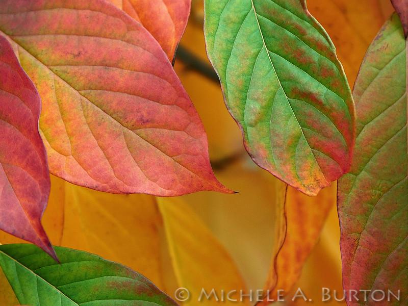 Fall_020_BBG_LH0A3128_M_Burton_