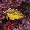 Fall_028_BBG_LH0A2353_M_Burton_