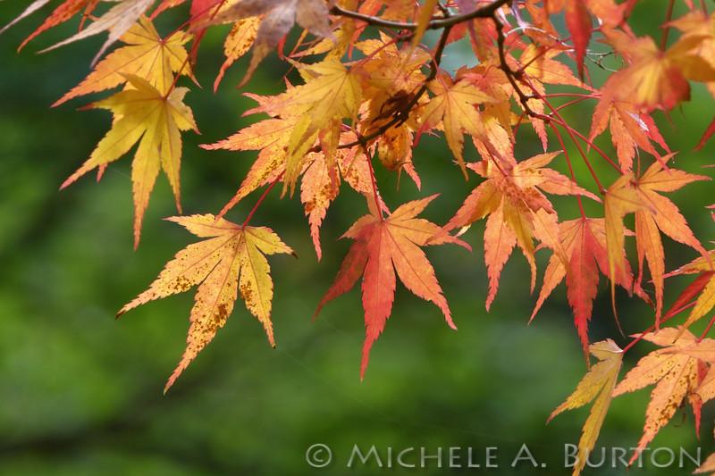 Fall_006_BBG_LH0A2457_M_Burton_
