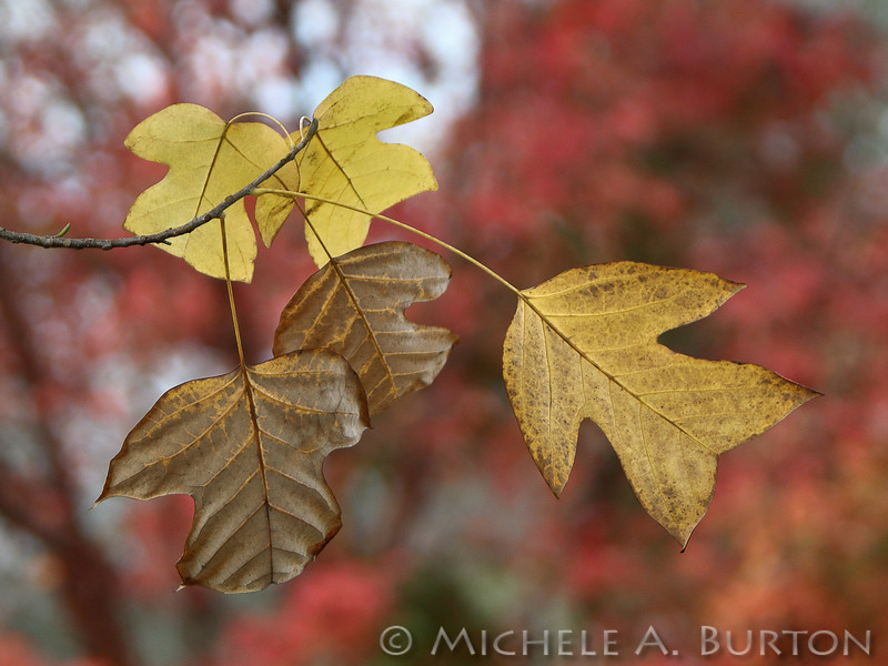 Fall_025_BBG_LH0A3199_M_Burton_