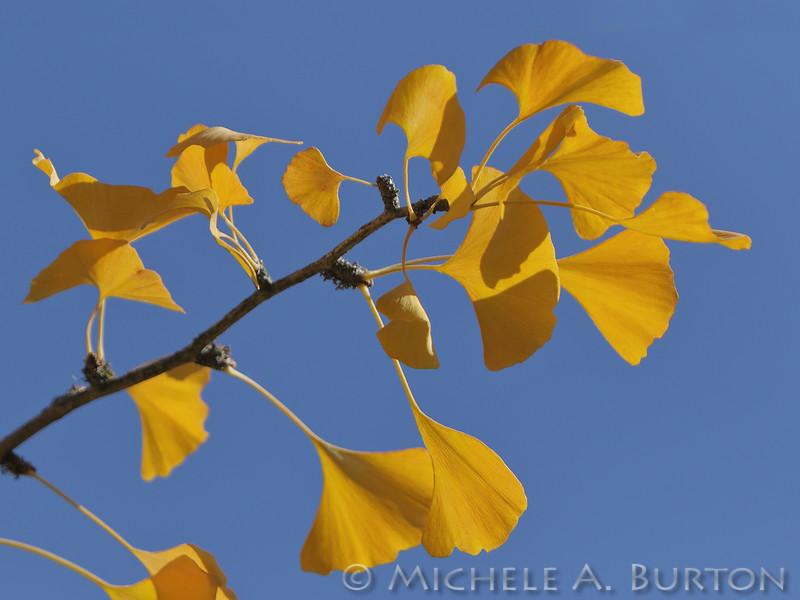 Fall_008_BBG_LH0A2601_M_Burton_