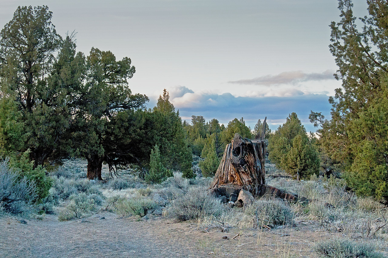 Grand old stump as twilight creeps in, in the Badlands Wilderness Nature Study Area, Bend, Oregon