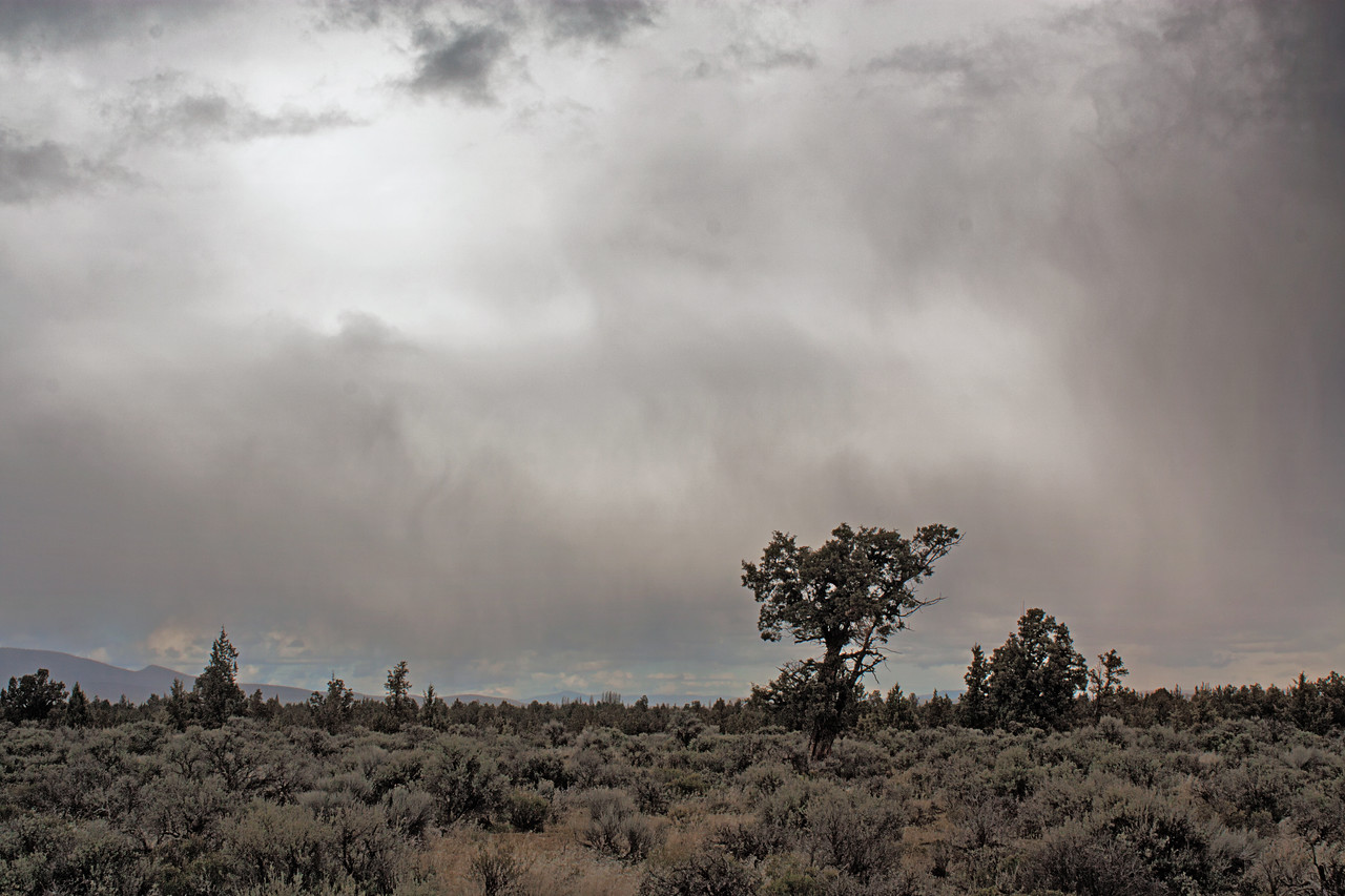 Lone Juniper and the oncoming storm in the Badlands Wilderness Nature Study Area, Bend, Oregon