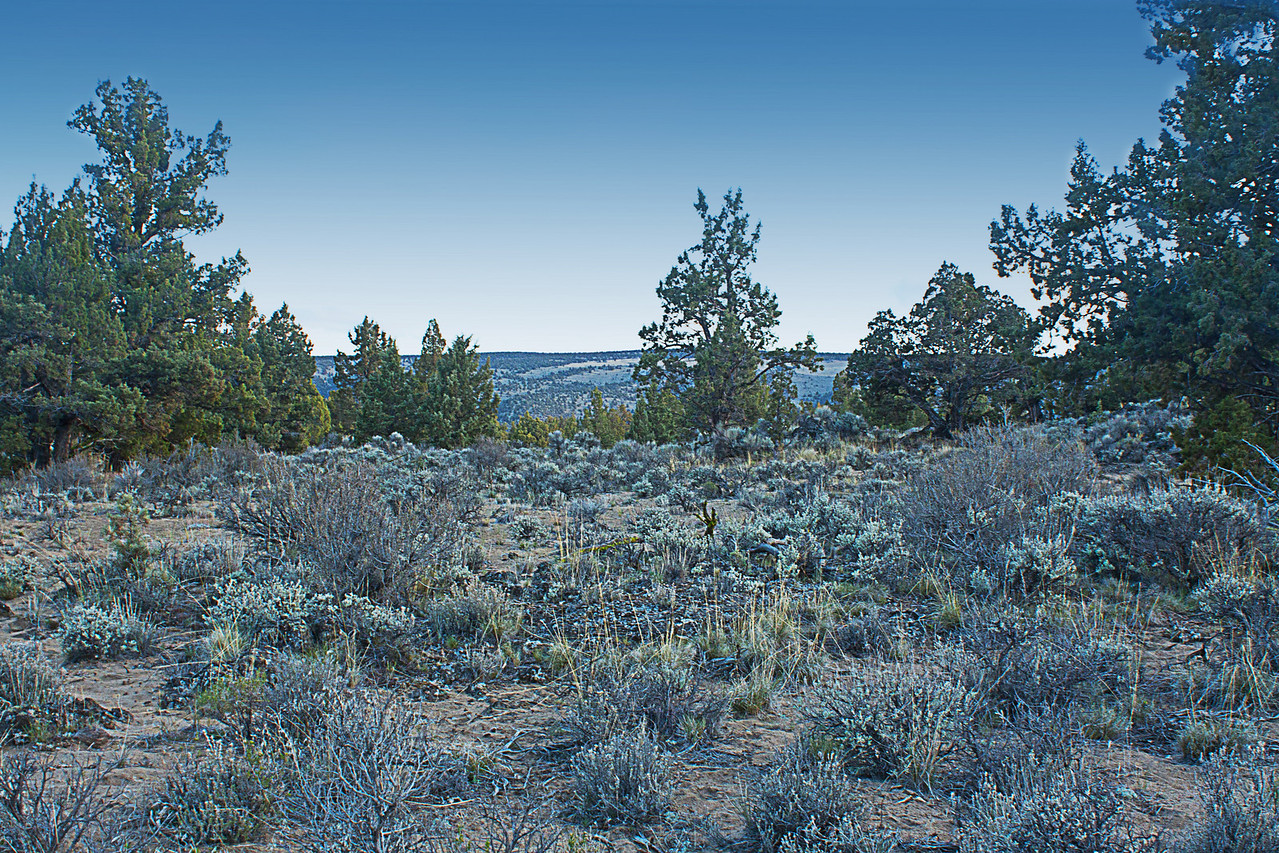 Twilight blues in the Badlands Wilderness Nature Study Area, Bend, Oregon