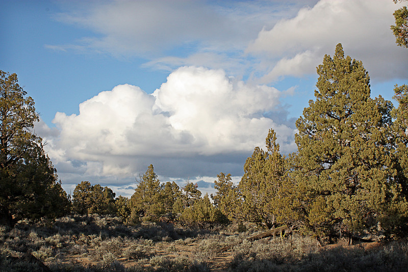 The storm in the distance, in the Badlands Wilderness Nature Study Area, Bend, Oregon