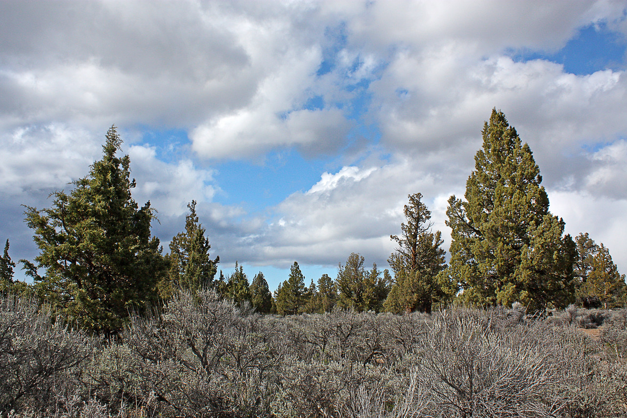 Juniper vista in the Badlands Wilderness Nature Study Area, Bend, Oregon