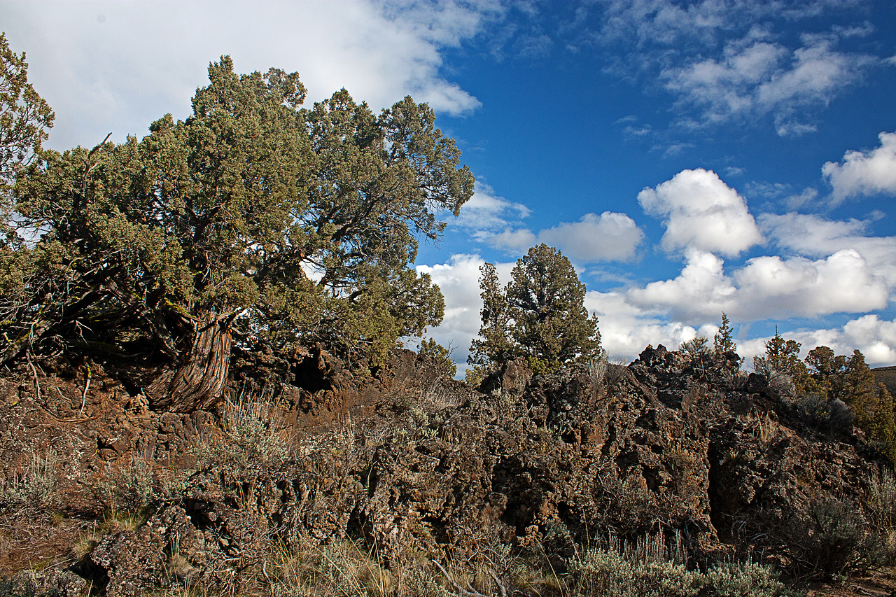Lava and Junipers in the Badlands Wilderness Nature Study Area, Bend, Oregon