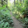 Banner forest