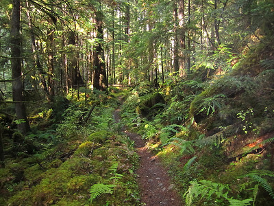 Lower Big Quilcene River Trail
