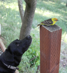 Shea & her friend the western tanager
