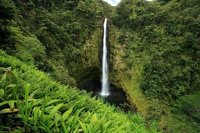 Akaka Falls. 0507_3992