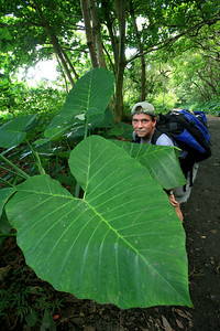 Waipio beach trail and the giant plants h0507_3554